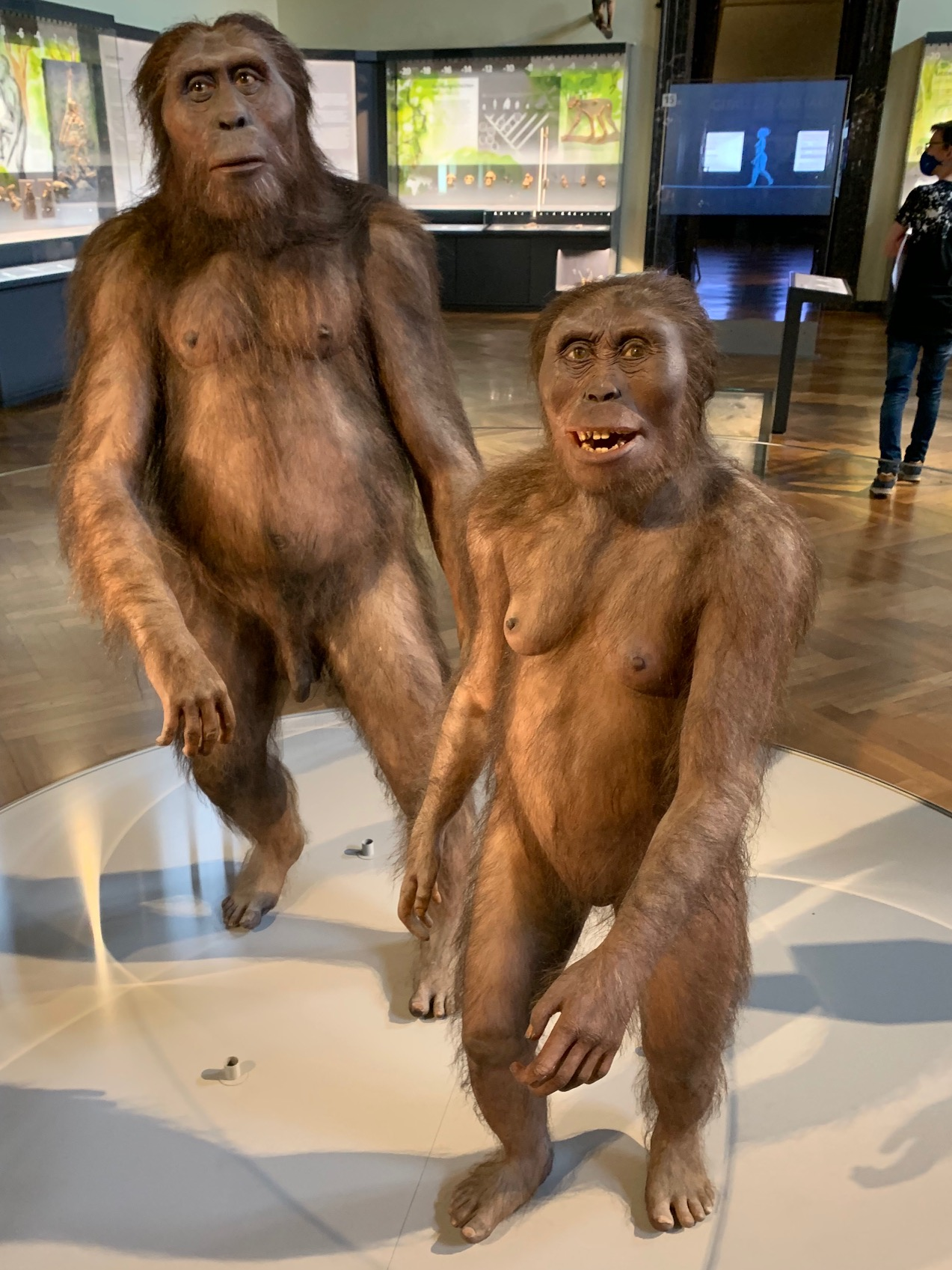 Lehrausgang Naturhistorisches Museum Wien 2GI